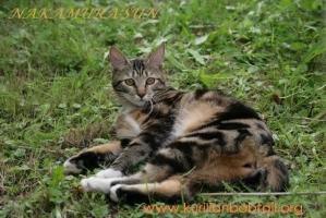 Lynx Standart Wendy3
