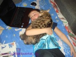 Бобтейлы любят детей