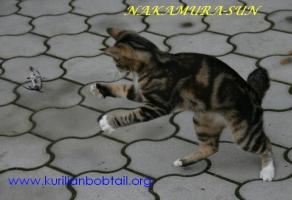 Кошки-мышки-3