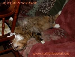 Блаженство кота