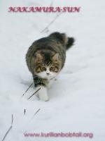 По мокрому снегу