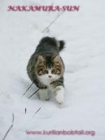 По мокрому снегу-2
