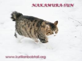 По мокрому снегу-3