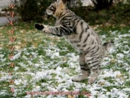 Игры на первом снегу