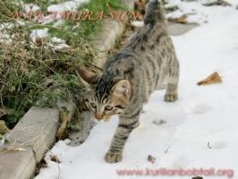 Жаконя- снежный барс-2