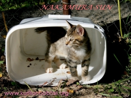 Ведро для переноски шестерых котят