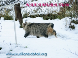 Прогулка по мокрому снегу