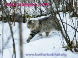 Прогулка по мокрому снегу-2