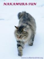 Прогулка по мокрому снегу-3