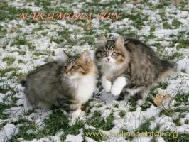 С братцем Жубером по первому снегу