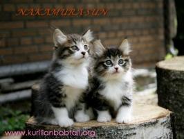 Две сестры-3