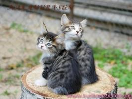 Две сестры-2