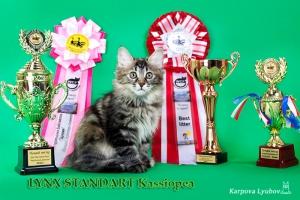 Кася, Best Litter
