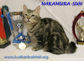 Котик Чёрный мрамор-4