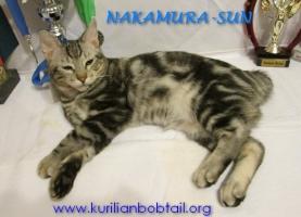 Котик Чёрный мрамор-7