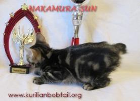 Котик Чёрный мрамор-3