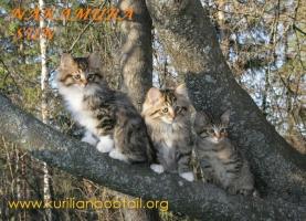 Три девицы вечерком:Патриция,Пенелопа,Полина