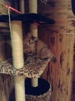 Лиза Джокондо в новом доме-7
