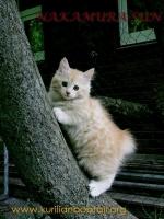 Красавец котик