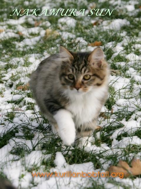 Первый снег-5