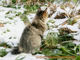 Первый снег-4