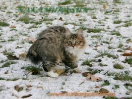 Первый снег-6