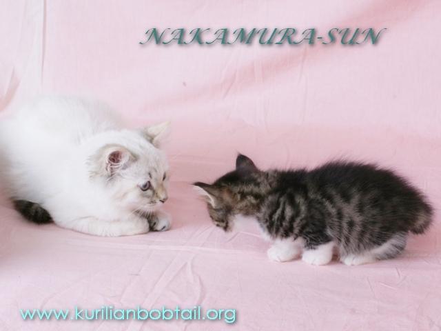 С кошками знаком с  5 недель