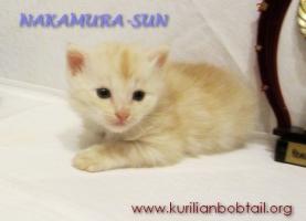 Котик кремовый