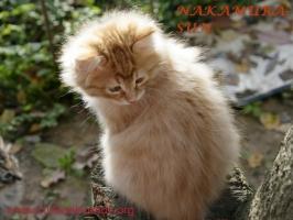 Светящийся котик