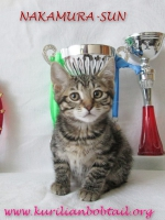 Кошка КШ- 2