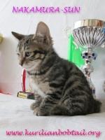 Кошка КШ- 1