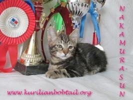 Котик КШ чёрный мрамор