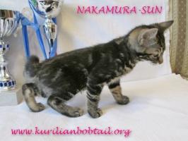 Котик КШ чёрный мрамор хвост крючком