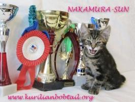 Котик КШ чёрный мрамор хвост крючком-3