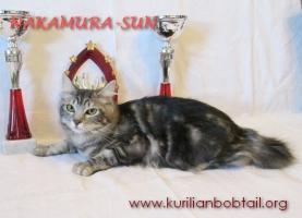 Кошечка мрамор на серебре-1