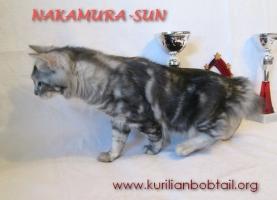 Кошечка мрамор на серебре-2