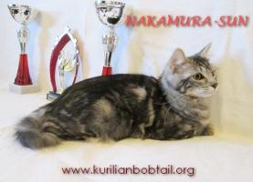 Кошечка мрамор на серебре-3
