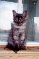 Кошечка чёрный дым с белым-2