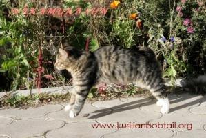 Скаковая кошка
