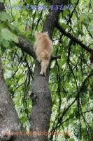 Подъём на дерево