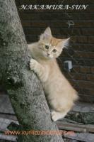 Взгляд с дерева