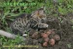 Копаем картошку. 3,5мес
