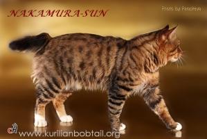 Родственник рыси, тигра и леопарда