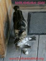 Веня поймала дрозда-7