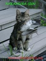 Веня поймала дрозда-5