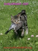 Веня поймала дрозда